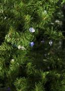 Christmas artificial tree No. 72, 210 cm, green