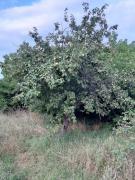 Продається земля в с. Пилиповичі, Бородянський р-н