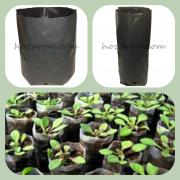 Seedling bags Seedling cups Seedling cups