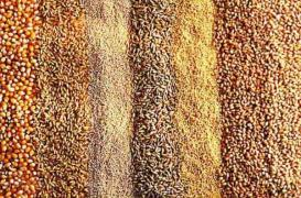 Seeds from the manufacturer. Cereals, oilseeds, legumes
